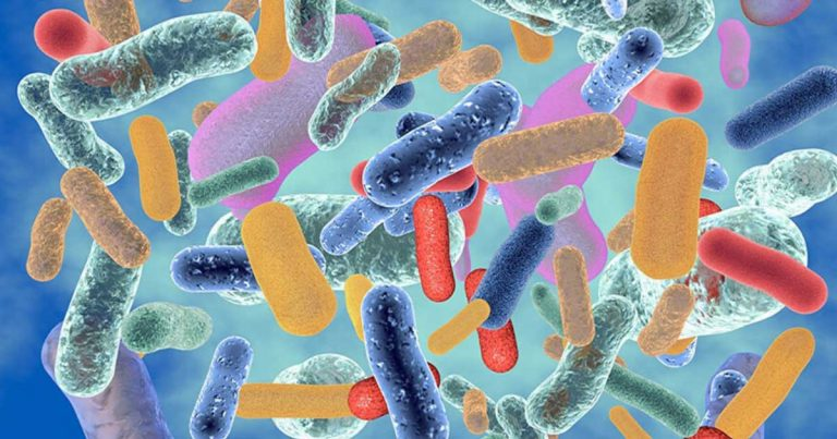 mikrobiota crevne flore