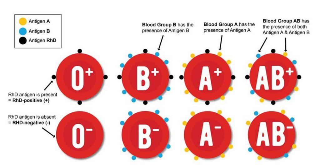 Određivanje krvne grupe i Rh faktora 1